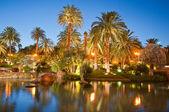 Palmbomen tijdens zonsondergang — Stockfoto