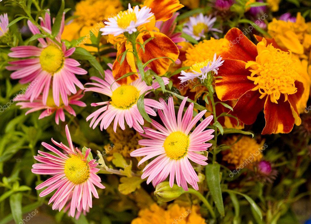 Mazzo di fiori autunnali foto stock oliynyk 4057772 for Immagini fiori autunnali