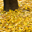 Yellow background of autumn leaves — Stock Photo