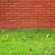 Brick and grass — Stock Photo