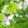 Background from green leaves — Foto Stock #4633415