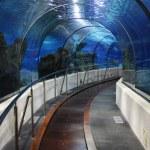 Tunnel in an oceanarium — Stock Photo