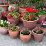 Flowerpots — Stock Photo #4633659