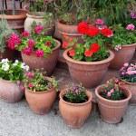 Flowerpots — Stock Photo