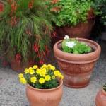 Flowerpots — Stock Photo #4633660