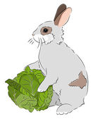 Rabbit with Cabbage — Stock Vector