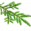 Stock Photo: Fir