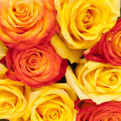 Róże, tło — Zdjęcie stockowe
