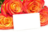 Roses with card — Stock Photo