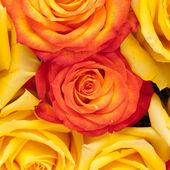 バラの背景 — ストック写真
