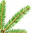 Green banch of fir isolated on white — Stock Photo