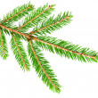 Green banch of fir isolated on white — ストック写真