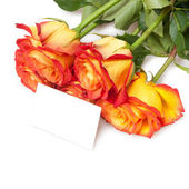 Roses isolated on white — Stock Photo