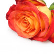 Beautiful rose — Stock Photo #4875985