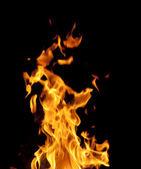 Fire isolated on black — Zdjęcie stockowe