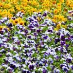 Flowers — Stock Photo #5325030