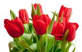Czerwone tulipany — Zdjęcie stockowe