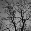 Stock Photo: Bare tree in dark forest