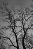 Bare tree in the dark forest — Stock Photo