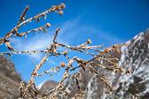 在春季的背景山干刺蓟 — 图库照片