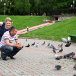 Pigeons - Stock Photo