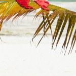 Santa hats on palm leaf — Stock Photo