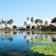 Lotus lagoon in Bali — Stock Photo #4046597