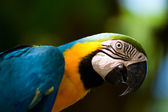 Colorful macaw parrot — Stock Photo