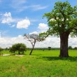 Tarangire landscape in Tanzania - Stock Photo