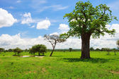 Tarangire landscape in Tanzania — Stock Photo