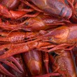 Crayfish background — Stock Photo