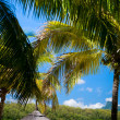 Tropical Paradise — Stock Photo #4686418