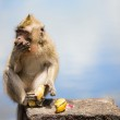 Wild Monkey — Stock Photo #4687145