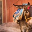 Donkey of Santorini — Stockfoto