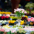 Flower market — Stock Photo #4689685