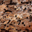 Wooden background — Stock Photo #4689741