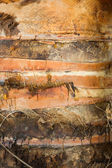 Coco Palm Texture — Stock Photo