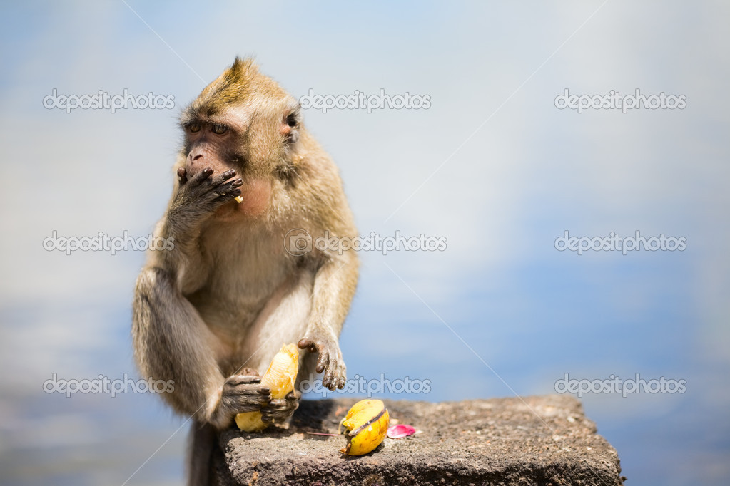 Wild cute little monkey eating banana — Stok fotoğraf #4687145