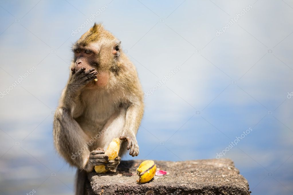 Wild cute little monkey eating banana  Stockfoto #4687145