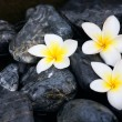 Frangipani flowers and spa stones — Stock Photo