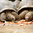 Giant turtles — Stock Photo #4693524