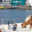 Dog on yacht — Stock Photo