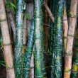 Bamboo Graffiti - Stock Photo
