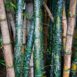 Bamboo Graffiti — Stock Photo