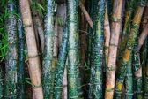 Bamboo Graffiti — Stock Photo