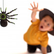 Spider hunting - Stock Photo
