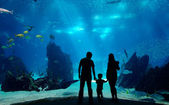 Underwater family — Stock Photo