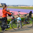 Stock Photo: Bicycling in Tulip Fields