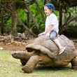 Riding Giant Turtle — Stock Photo #4730423