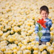 Boy in Tulip Field — Stock Photo #4730425